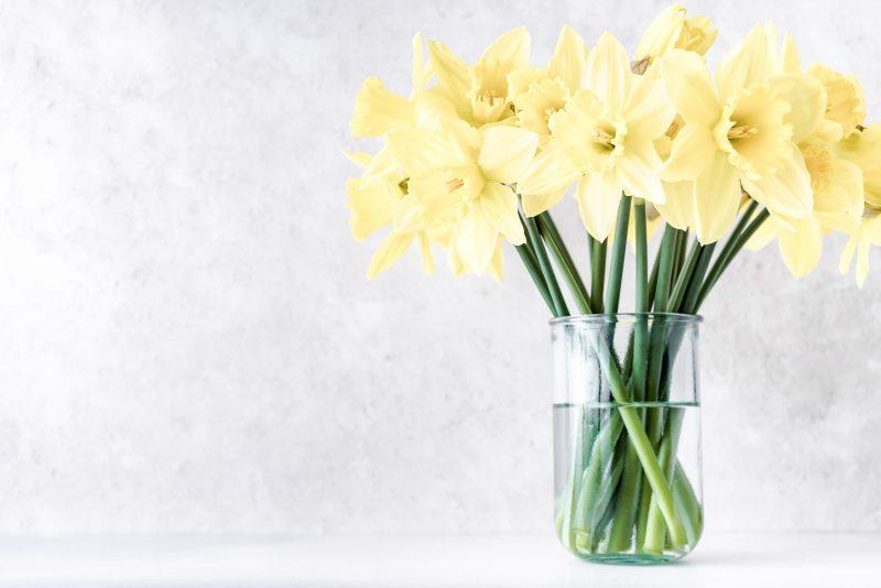 Fresh Daffodils in a glass vase