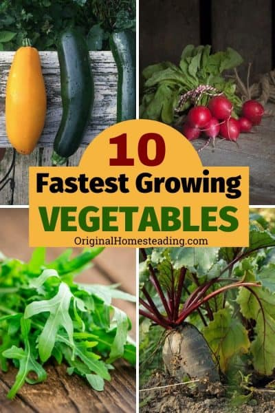 Top 10 Fastest Growing Vegetables of All Time { the easiest, too! } promo image