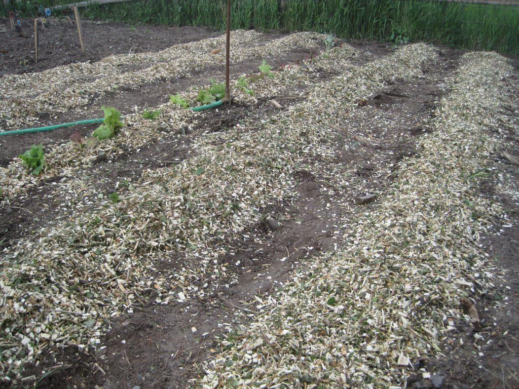 Spread Wood Chips Mulch in Garden Beds