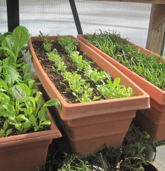 GARDEN SEED STARTING IDEAS: 10 Ways You Must Try