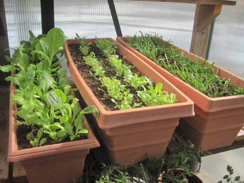 Garden seed starting ideas 10 ways you must try for Original garden ideas