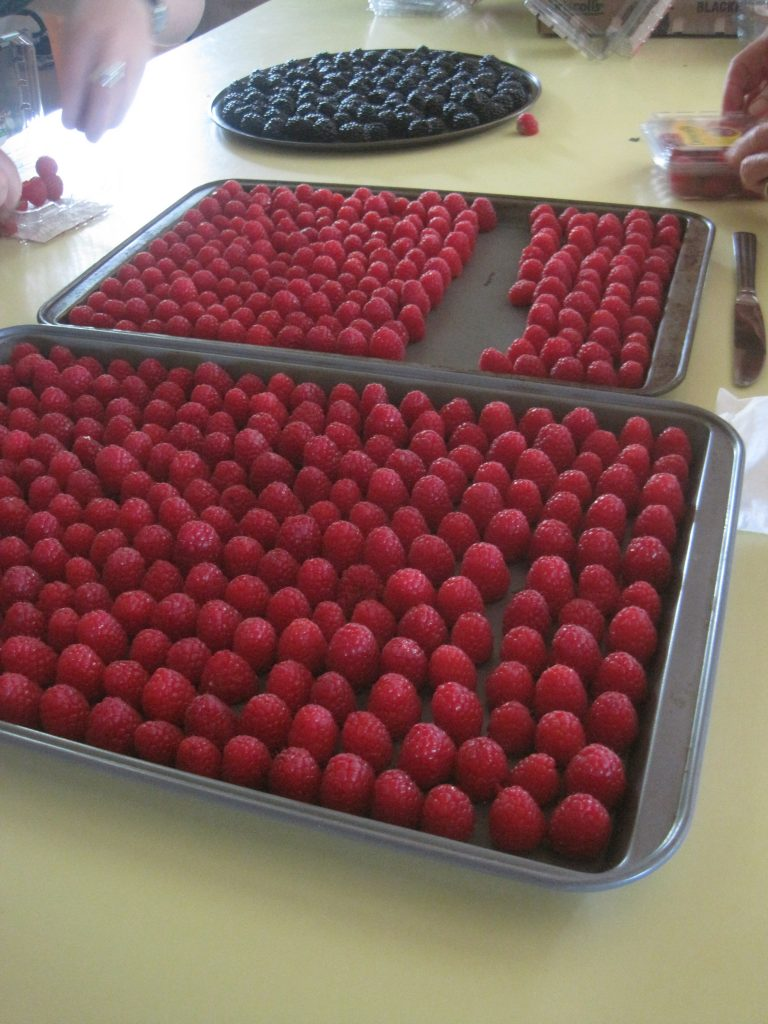 Getting Trays of Raspberries Ready for the Freezer