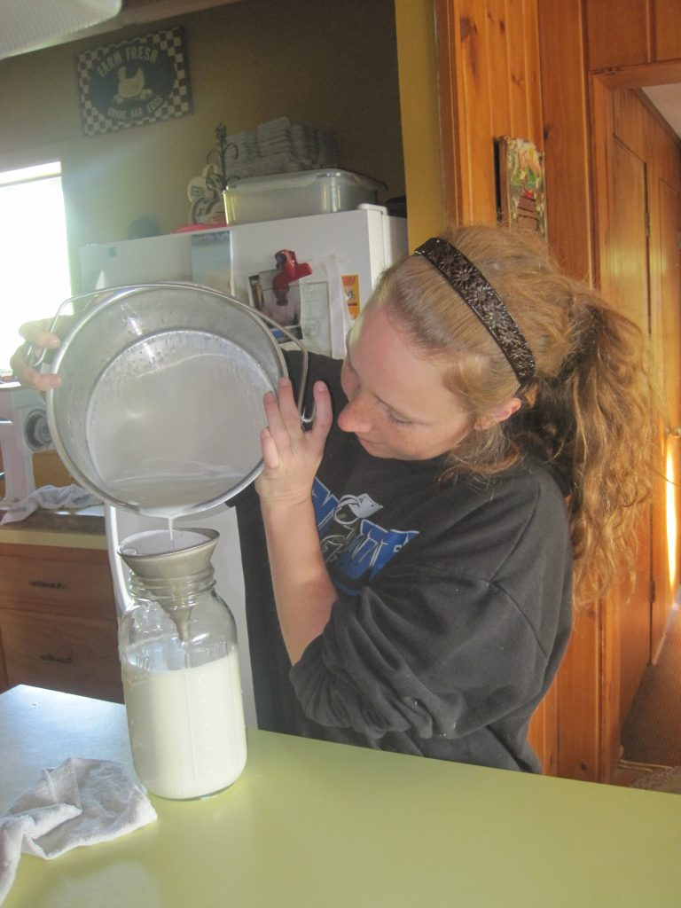 Judith Straining Fresh Goat Milk