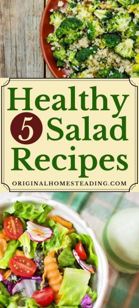 5 Delicious & Healthy Salad Recipes You Should Give a Try promo image