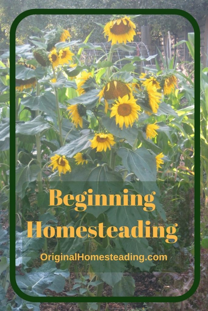 Begin Homesteading Sunflowers