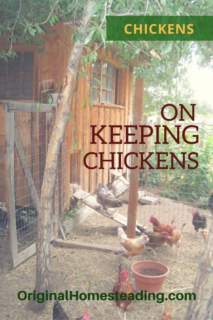 CHICKENS 1 683x1024 - Raising Chicks and Chickens for Beginners: Tips for Raising Baby Chicks