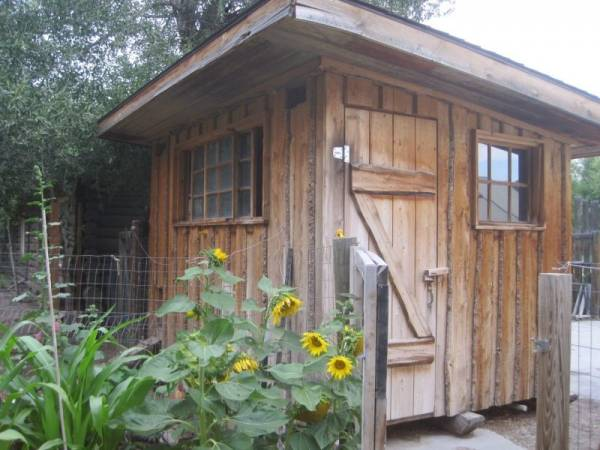 rustic but strongly constructed chicken coop with a wooden door and windows that is surrounded by yellow sunflowers and shady cottonwood trees.