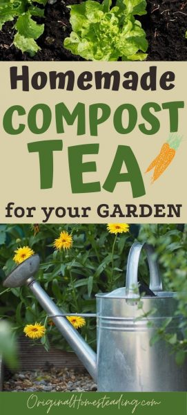 How to Make Compost Tea for your GARDEN promo image