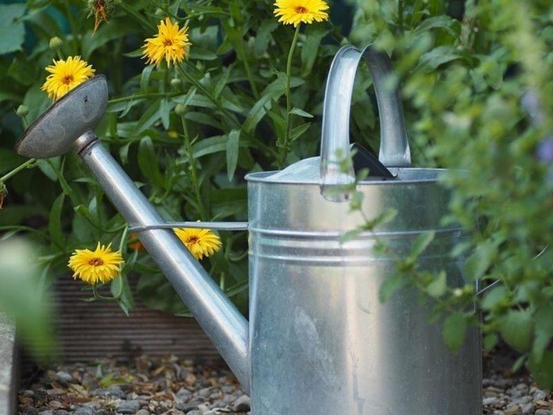DIY Compost Tea in Watering Can