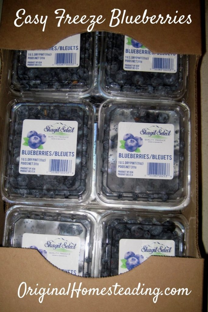 Freezing Blueberries - The Easy Way