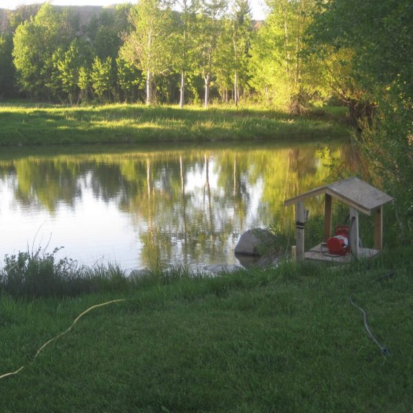 Electric Water Pump by Pond