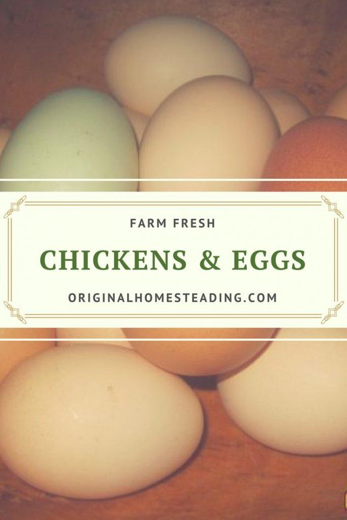 Tips for Raising Baby Chicks!!