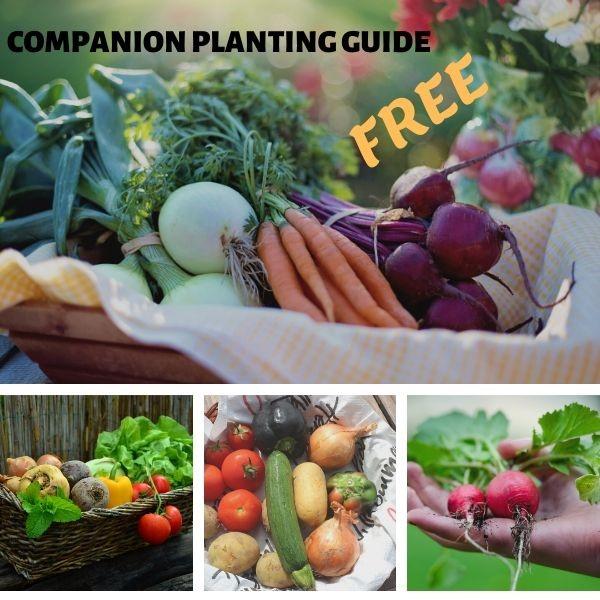 Free Companion Planting Guide