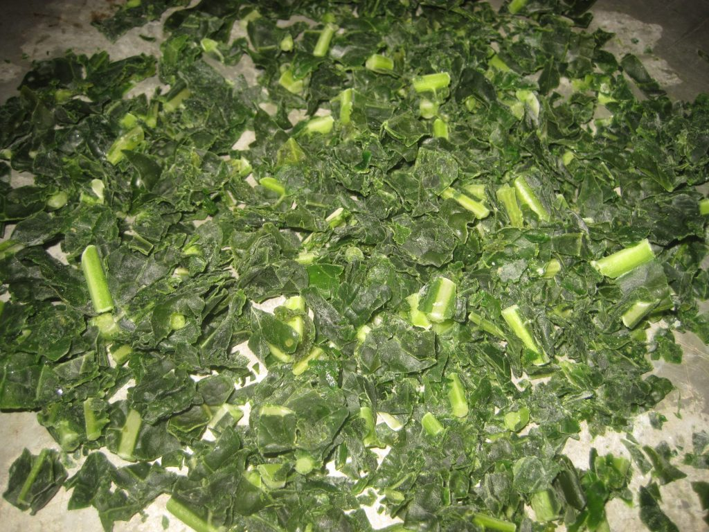 Freezing kale on a cookie sheet makes it very convenient and easy to add to many dishes.