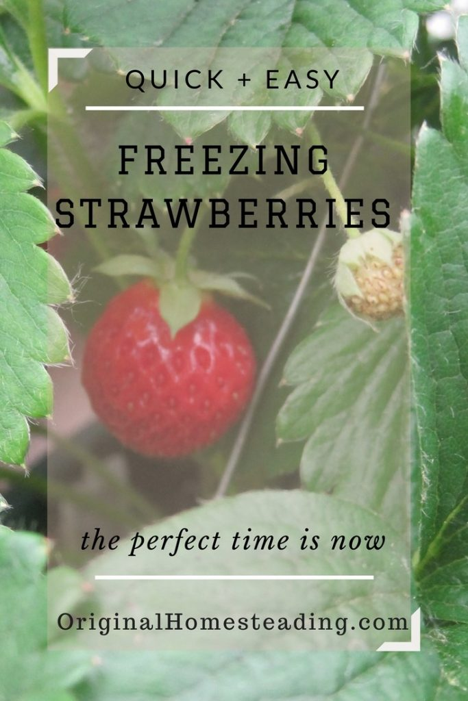 How to Freeze Strawberries the easy way!!!