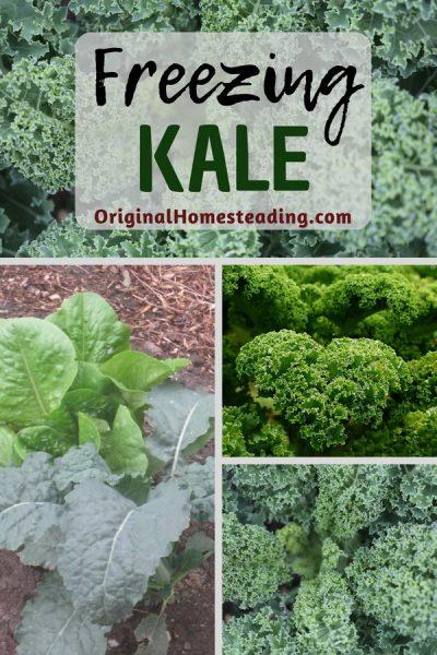 Freezing Kale in Individual Servings