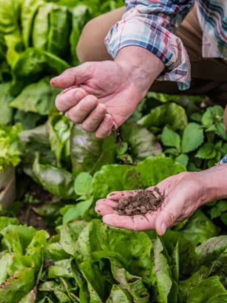 gardener testing the soil for proper pH levels