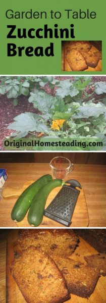 grow zucchini squash