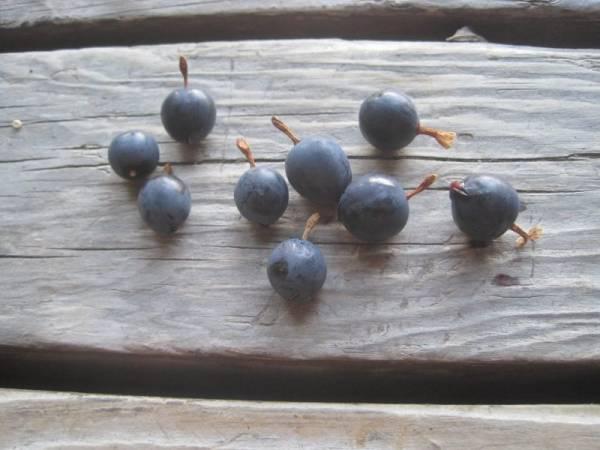 black mountain gooseberries on a wooden porch board