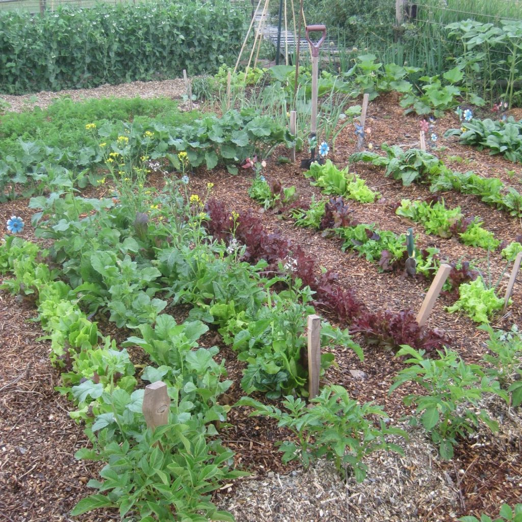 Kitchen Garden planted in rows, blocks and beds makes for an interesting garden design.