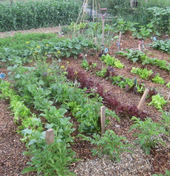 Kitchen Garden | Such a Convenient Idea |  Easy to Plant
