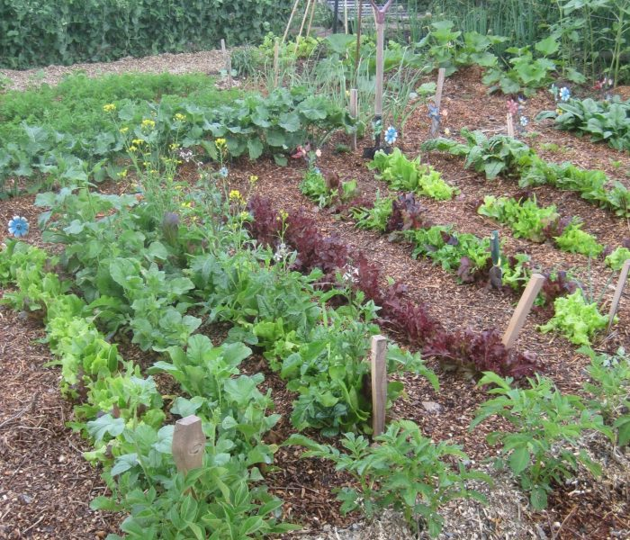 Kitchen Garden | Such a Convenient Idea |  Easy to Plant