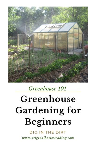 GREENHOUSE GARDENING: For Beginners promo image