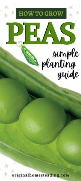 How to Grow Peas promo image