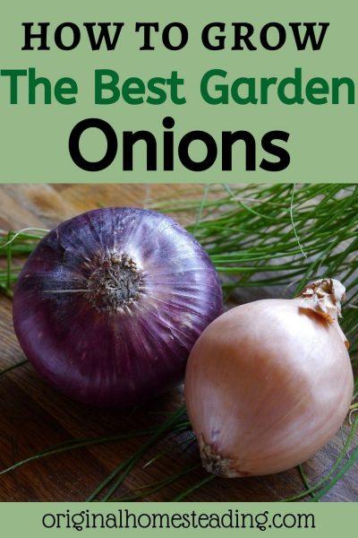 Growing Garden Onions
