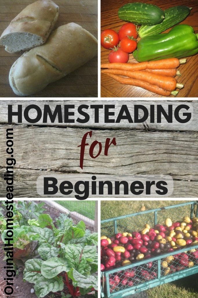 Beginning Homesteading