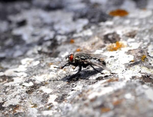 pesky house fly on a rock