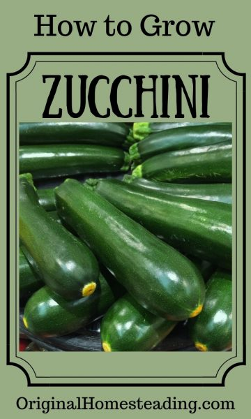 HOW to GROW ZUCCHINI   How to Grow Series promo image