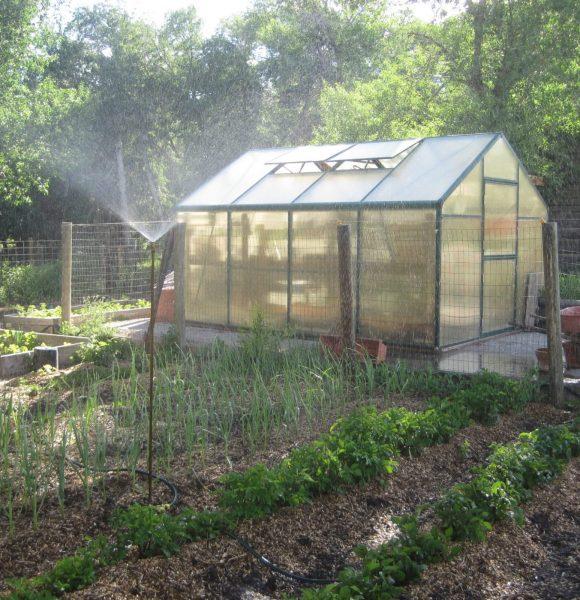 GREENHOUSE GARDENING | For Beginners