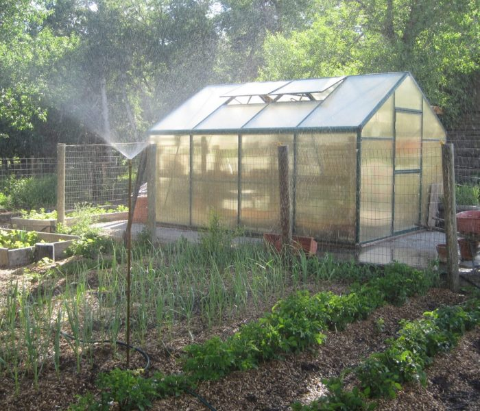 GREENHOUSE GARDENING | For Beginners