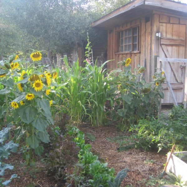 Make and Save Money on Your Homestead:  85+ Creative Ways
