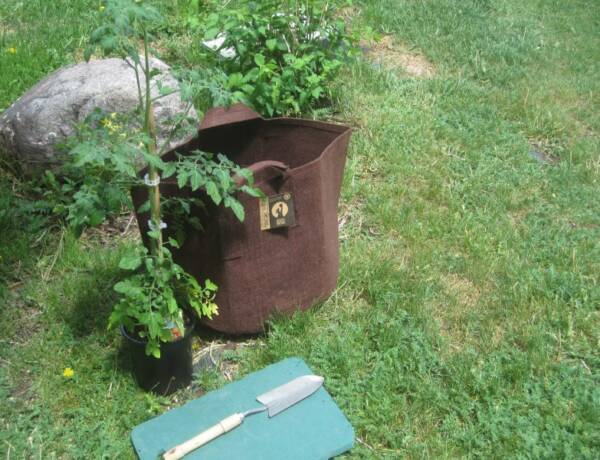 Cloth growing pouch and tomato plant