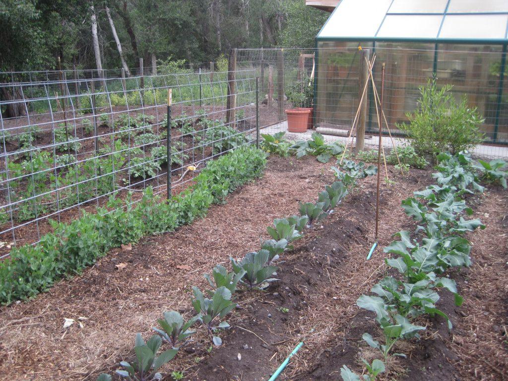 Locate Your Best Garden Spot