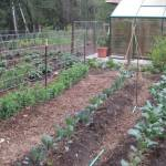 Learn about Vegetable Garden Crop Rotation to build a stronger garden soil and grow better vegetables.