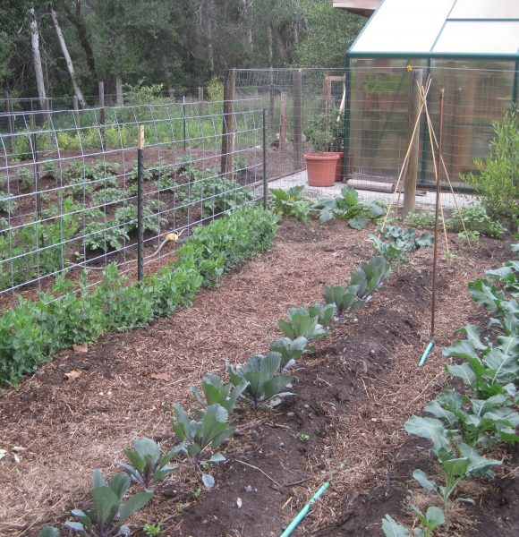 Vegetable Garden Crop Rotation Guide   Simple to Follow