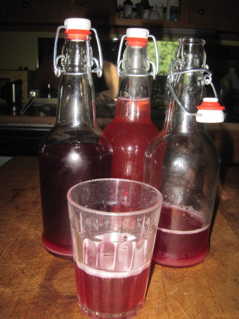 Kefir Water Soda Bottles