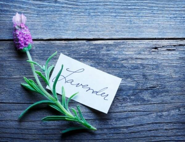 a small lavender sprig on a wooden board with a tag the says the word lavender