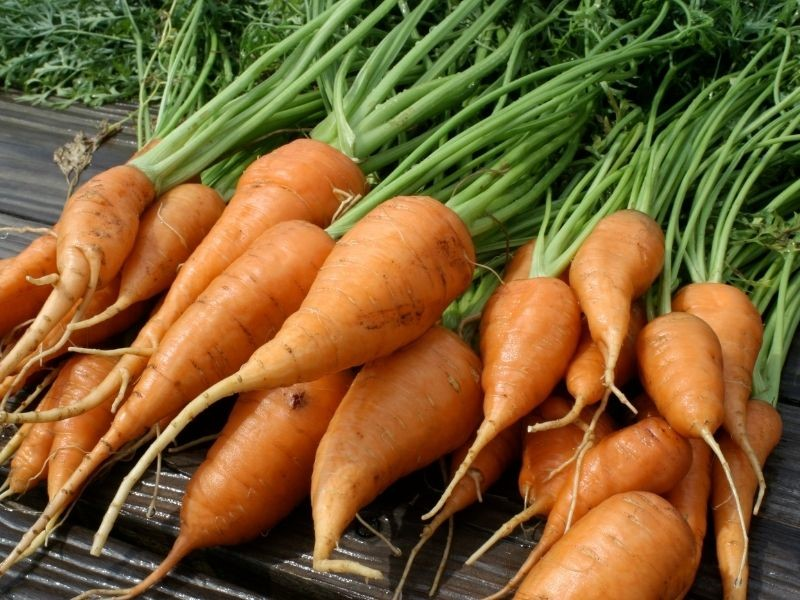 small carrots are being prepared to store in the refrigerator