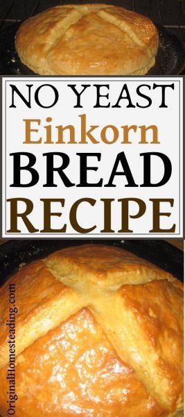 No Yeast Einkorn Bread Recipe ~ Ready in One Hour! promo image