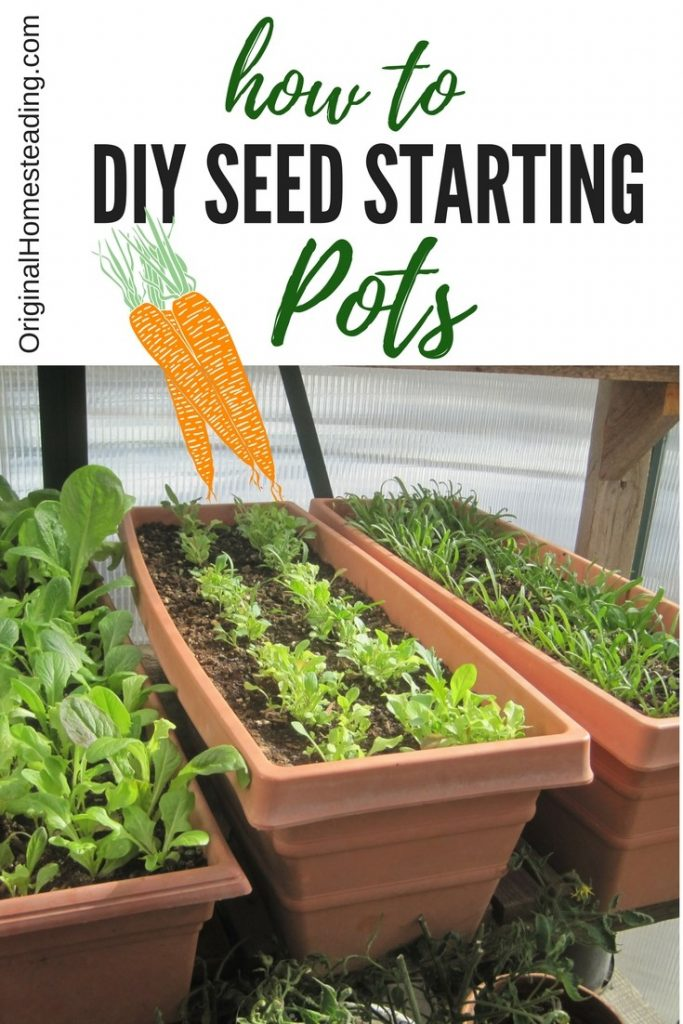 garden seed starting ideas