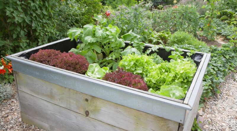 Garden plants growing in wooden box