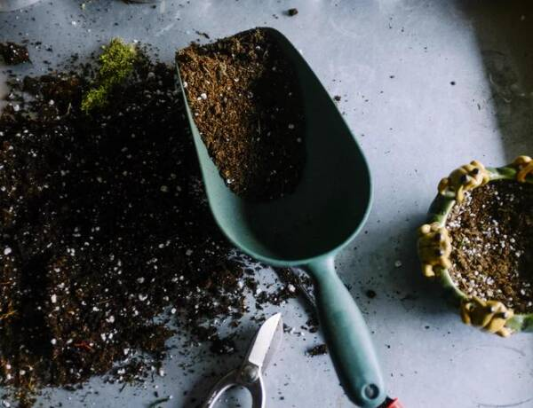 DIY Soil pH Test