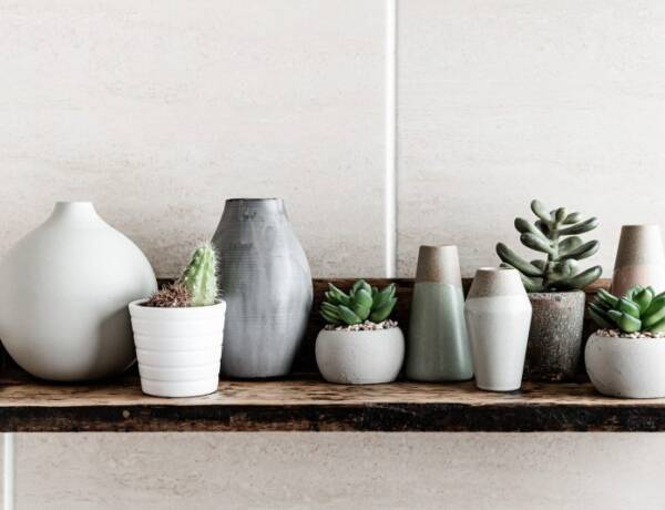 clean ceramic vases and succulent plants create fresh feeling in a house