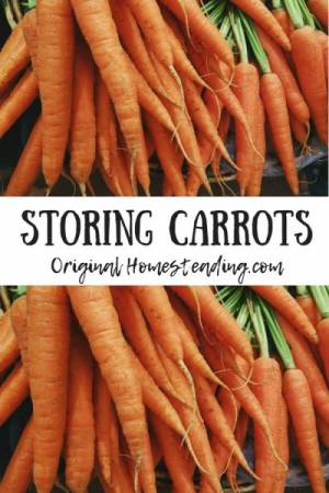 Learn more about storing garden carrots in peat moss, river sand and sawdust.