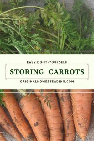 Storing your garden carrots in peat moss, river sand, or saw dust helps them stay fresh and crisp for months and months.