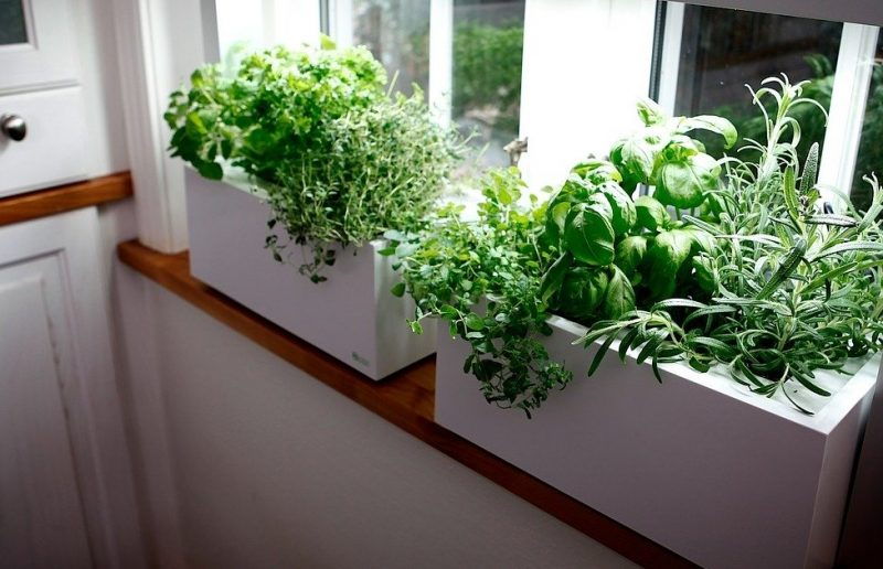 Sunny Window Sill with a small Herb Garden